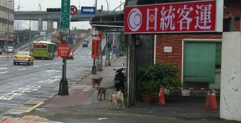 台湾 - 犬
