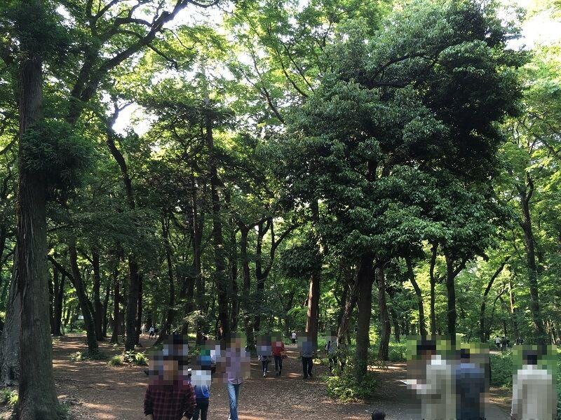 神代植物公園_雑木林