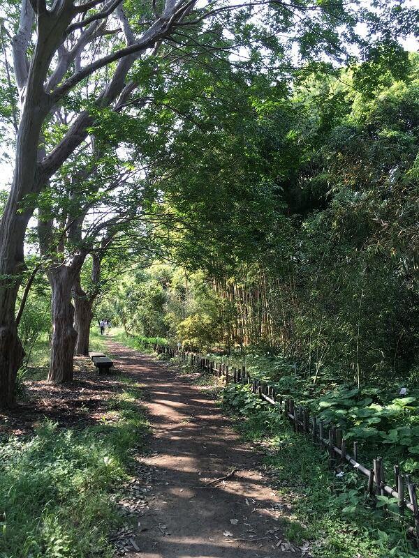 神代植物公園_竹・笹園