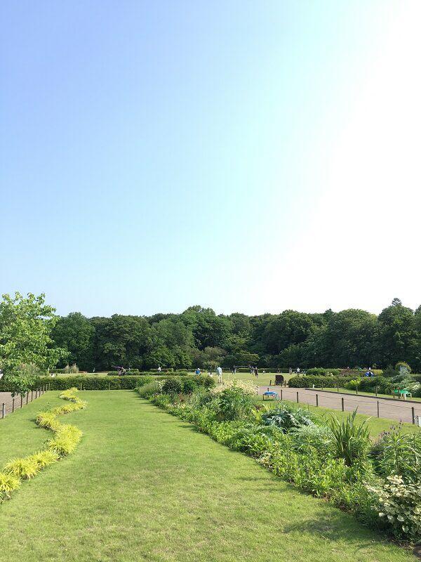 神代植物公園_芝生広場