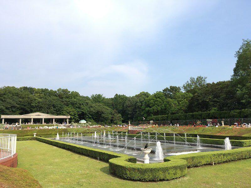 神代植物公園_ばら園3