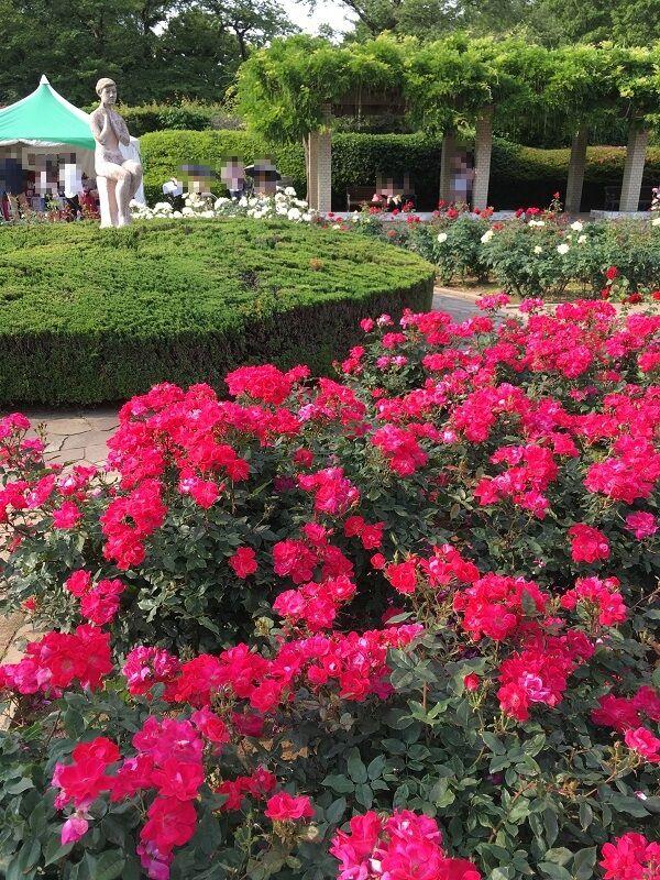 神代植物公園_女とバラ2