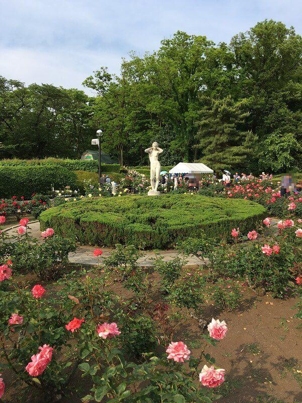 神代植物公園_女とバラ3