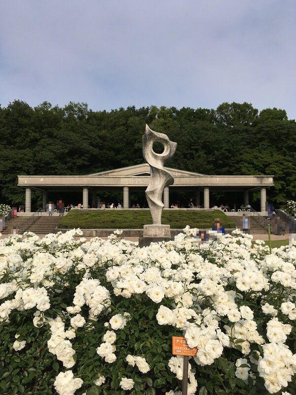 神代植物公園_白いバラ