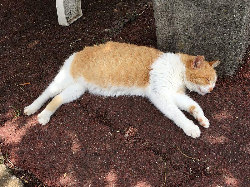熱海 ぐっすり気持ち良さそうに眠る猫2