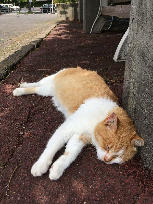 熱海 ぐっすり気持ち良さそうに眠る猫3