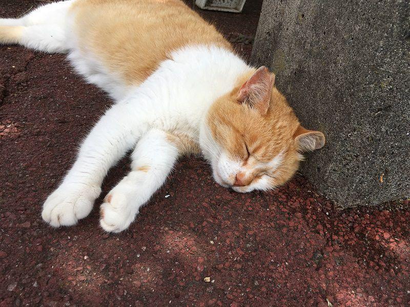 熱海 ぐっすり気持ち良さそうに眠る猫4