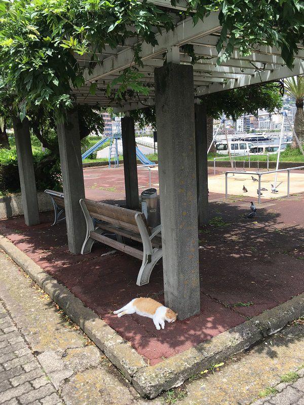 熱海 ぐっすり気持ち良さそうに眠る猫1