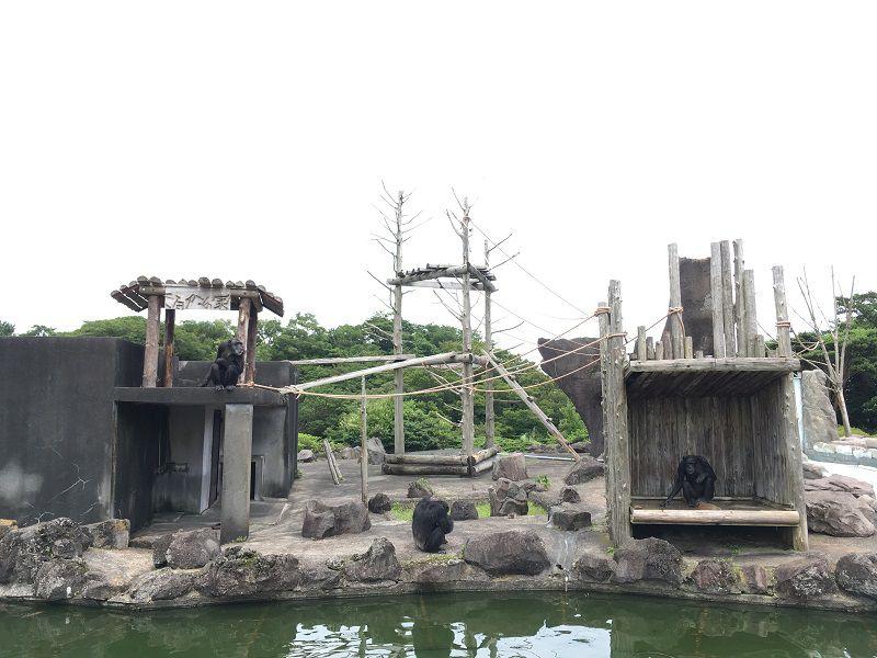 伊豆シャボテン公園 チンパンジーの島