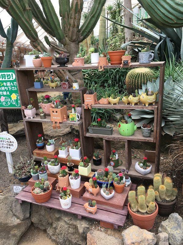 伊豆シャボテン公園 シャボテン温室 サボテン狩り 植木鉢