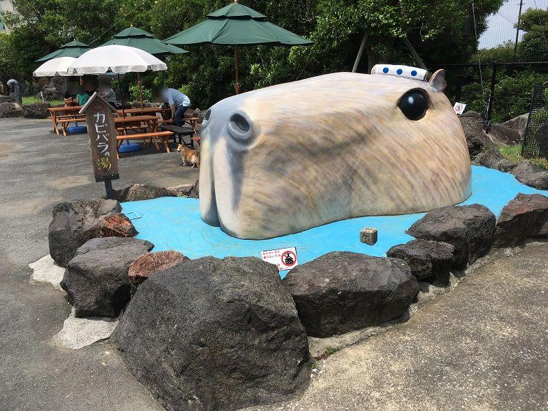 伊豆シャボテン公園 カピバラの湯