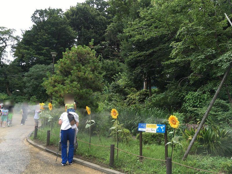 野毛山動物園 ひまわり ミストシャワー