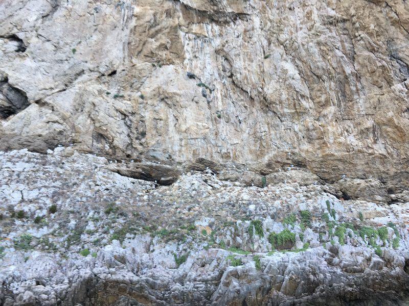 イタリア カプリ島 絶壁にいる鳥の集団
