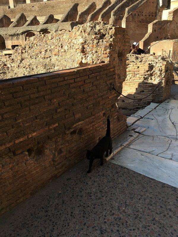 イタリア ローマ コロッセオ 猫