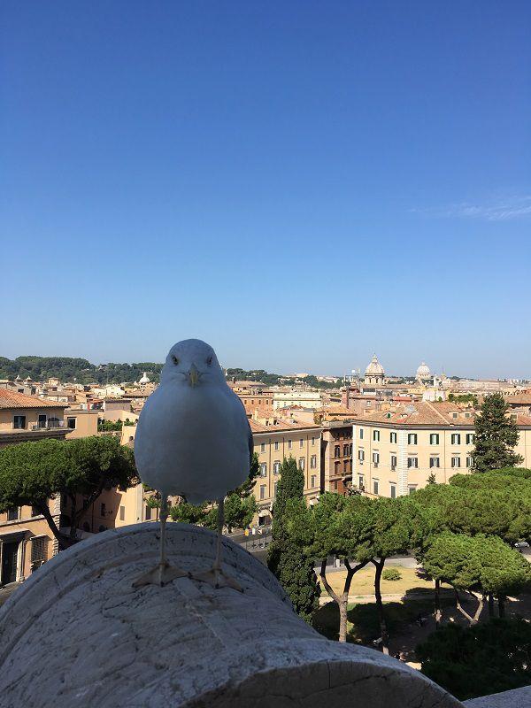 イタリア ローマ ヴィットーリオ・エマヌエーレ2世記念堂 鳥