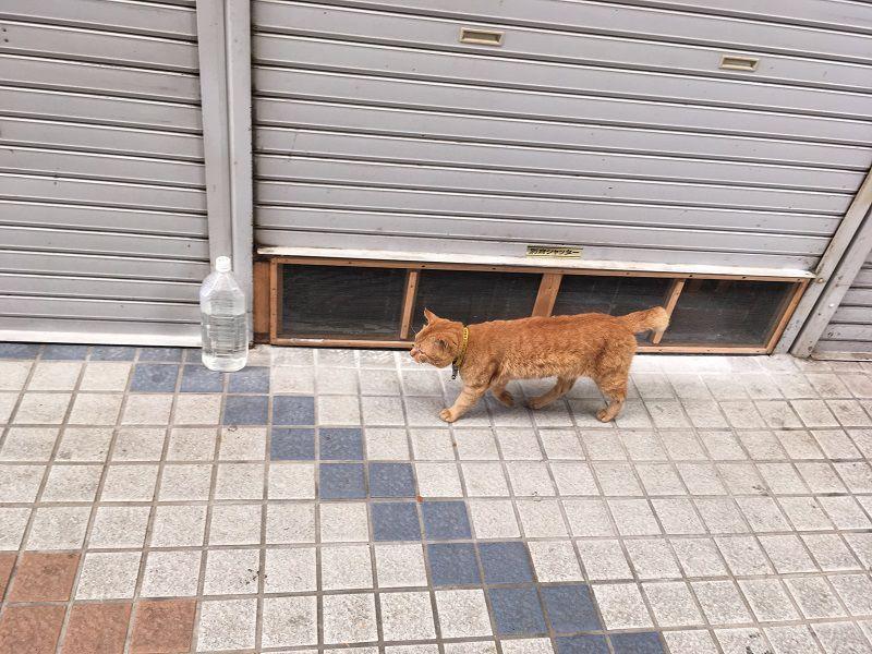 別府温泉 別府駅近くの商店街の猫