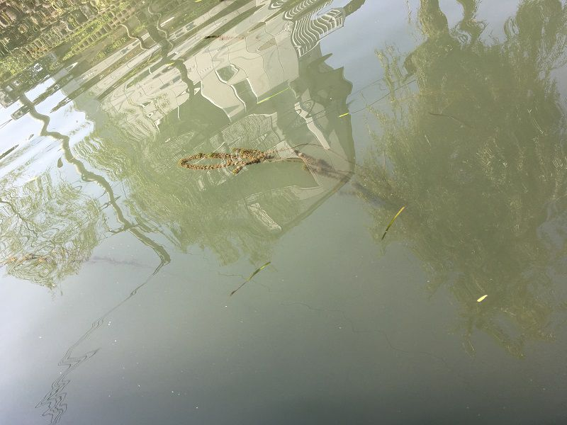 柳川 川下り 水質