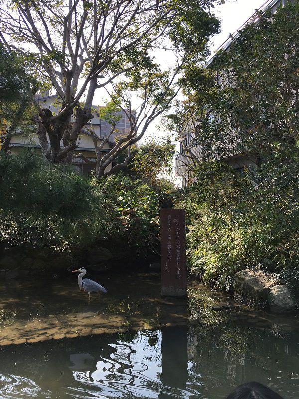 柳川 川下り 鳥 アオサギ1