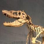 男一人で福井県立恐竜博物館に行ってきた