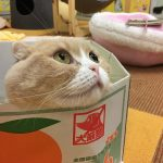男一人で錦糸町の猫カフェ「猫まるカフェ East」に行ってきた