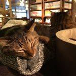 男一人で池袋の猫カフェ「猫の居る休憩所299」に行ってきた