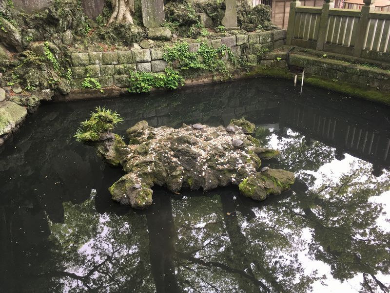 成田山新勝寺 カメ 岩 池