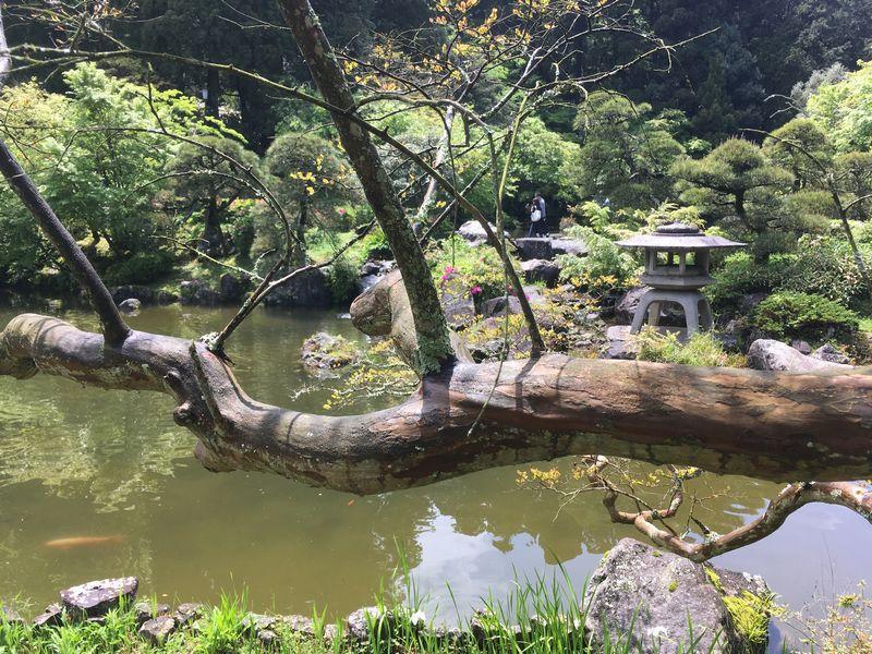 成田山新勝寺 成田山公園 池