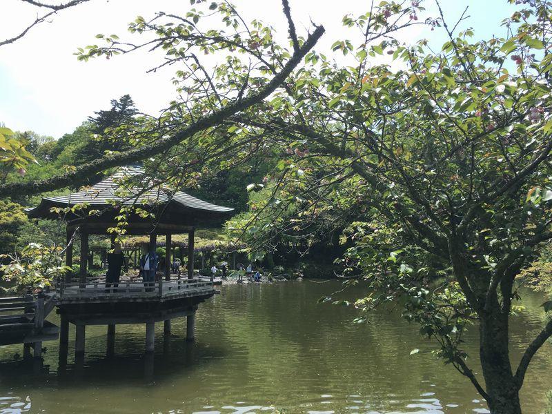 成田山新勝寺 成田山公園 浮御堂 池