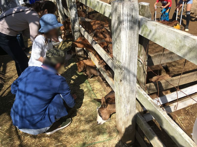 成田ゆめ牧場 ヤギ