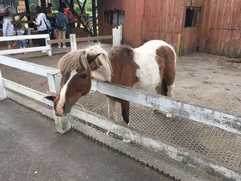 まかいの牧場 馬 ポニー