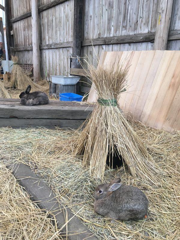 まかいの牧場 うさもるの村 ウサギ