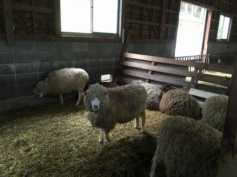 まかいの牧場 羊の家