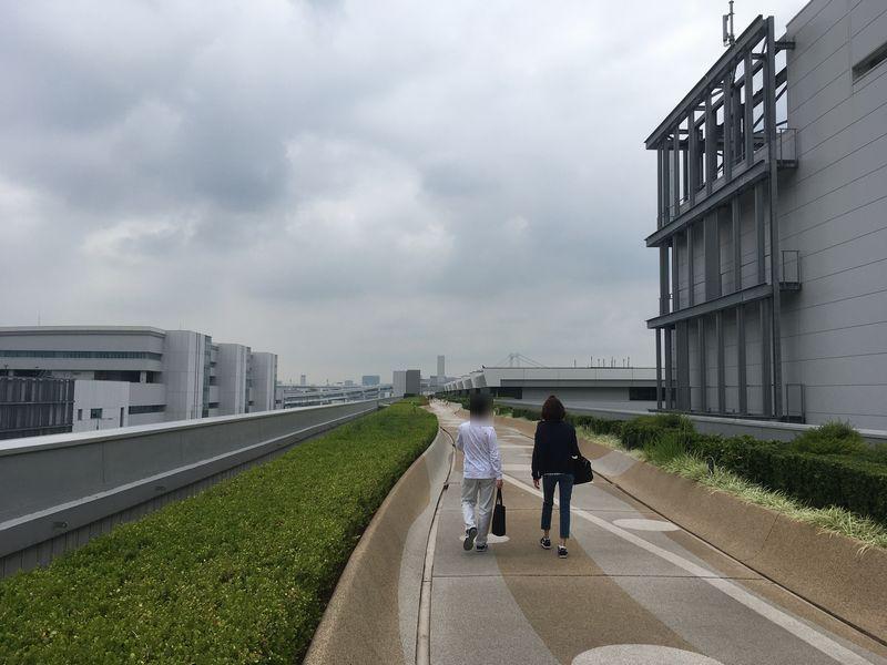 豊洲市場 水産仲卸売場棟 屋上緑化広場への道