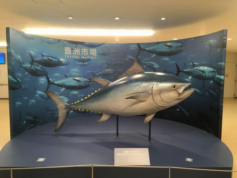 豊洲市場 水産卸売場棟 国産クロマグロ 模型