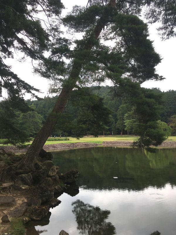 平泉 毛越寺 大泉が池 築山