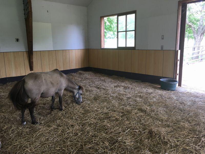 小岩井農場 まきばのホール おうまさんとふれあいコーナー 馬