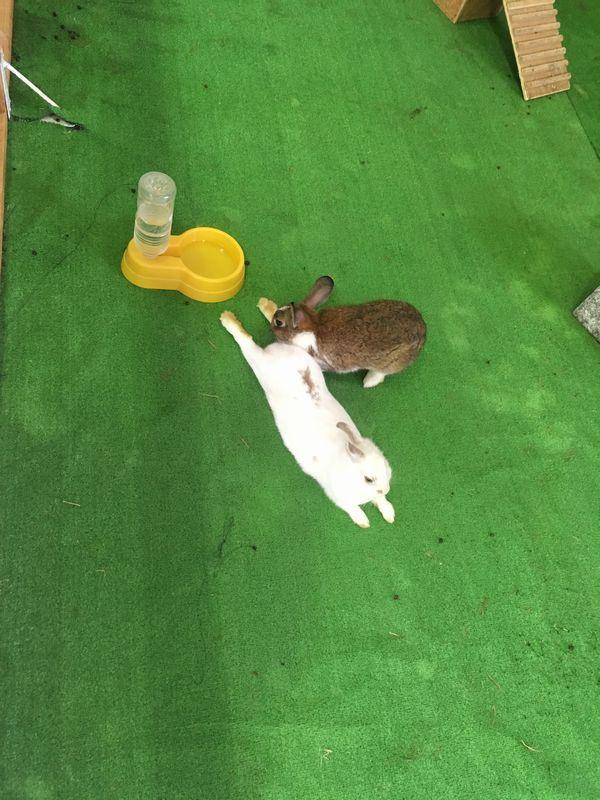 小岩井農場 まきばのホール ウサギ