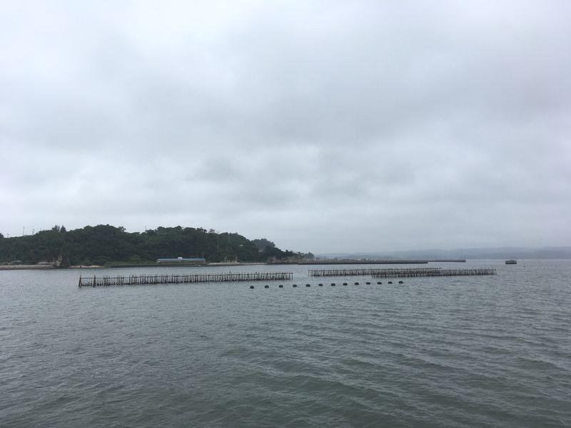松島 遊覧船 松島島巡り観光船 牡蠣 カキ 養殖