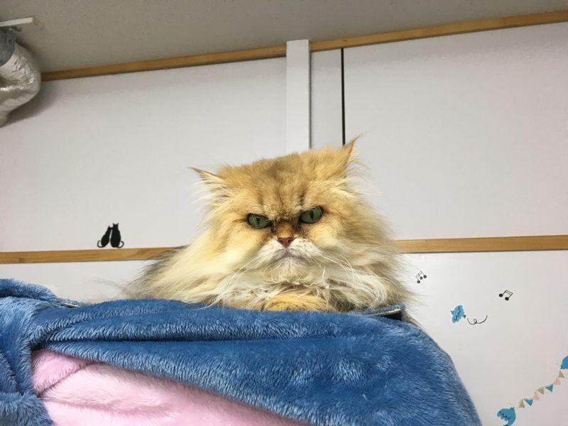 猫カフェ ひとやすみ