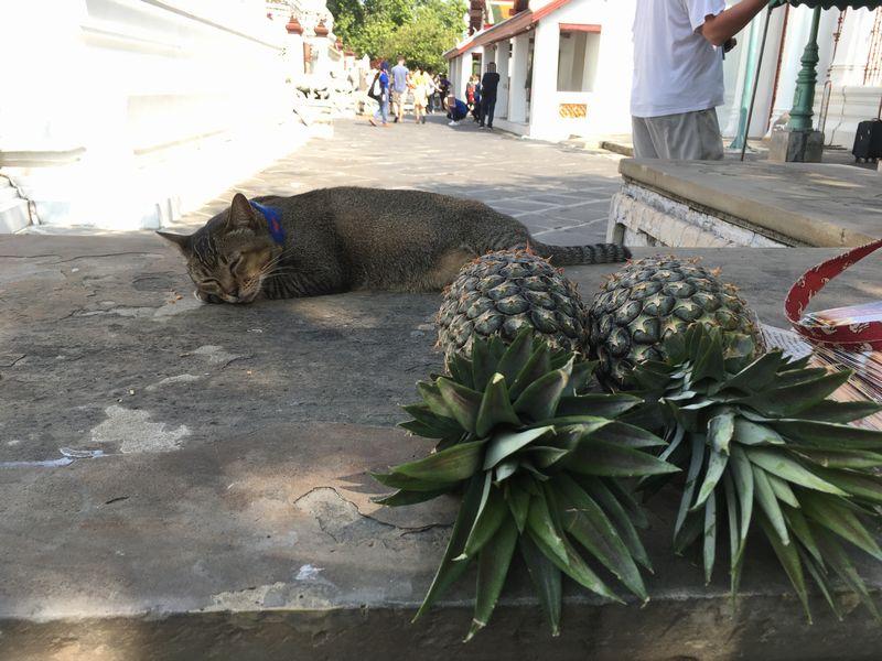 タイ バンコク ワット・アルン 猫 パイナップル