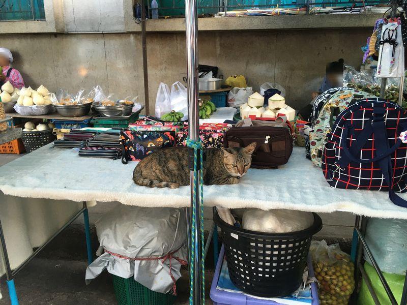 タイ メークロン線路市場 屋台 猫