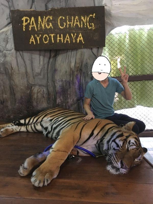 タイ アユタヤ遺跡 PANG CHANG AYOTHAYA トラ