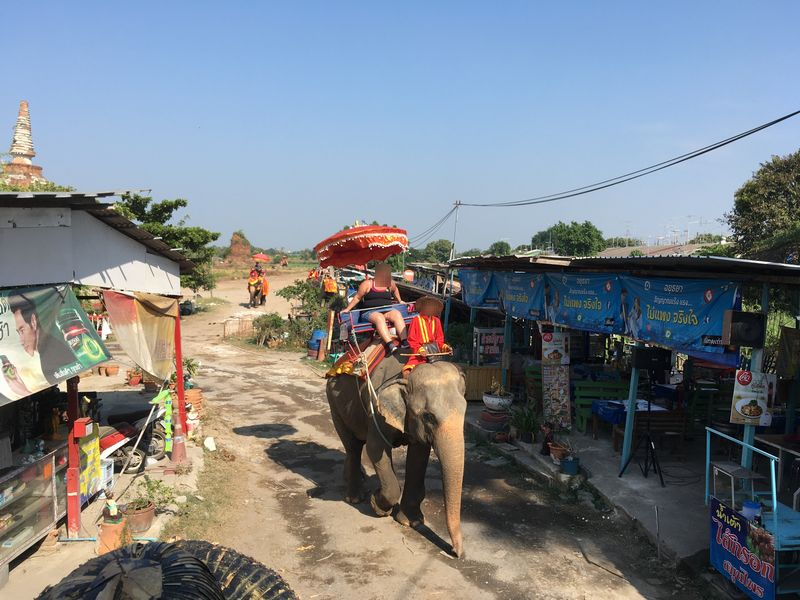 タイ アユタヤ遺跡 PANG CHANG AYOTHAYA ゾウ乗り体験
