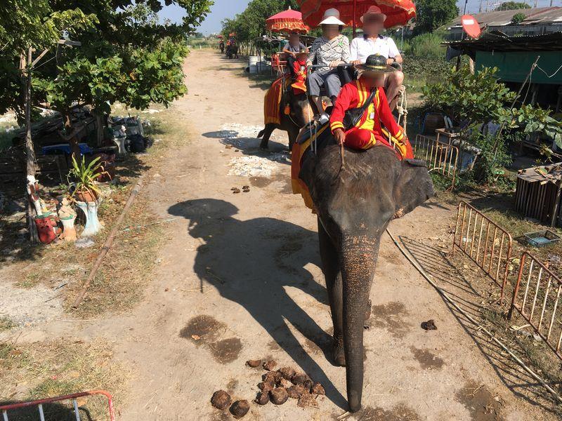 タイ アユタヤ遺跡 PANG CHANG AYOTHAYA ゾウ乗り体験 うんこ