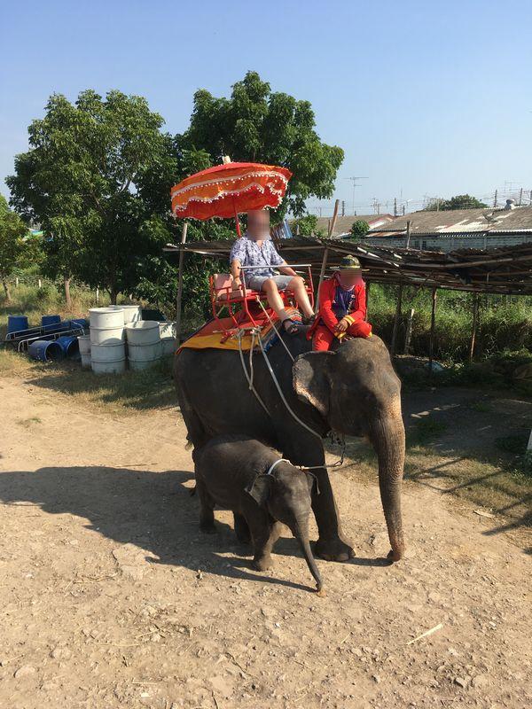タイ アユタヤ遺跡 PANG CHANG AYOTHAYA ゾウ乗り体験 子象