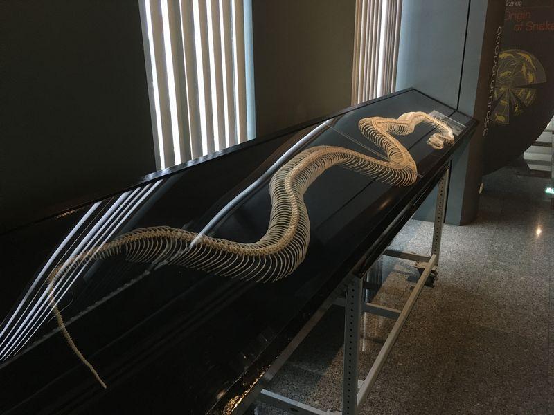 タイ バンコク スネークファーム SNAKE FARM ヘビ ビルマニシキヘビ 骨