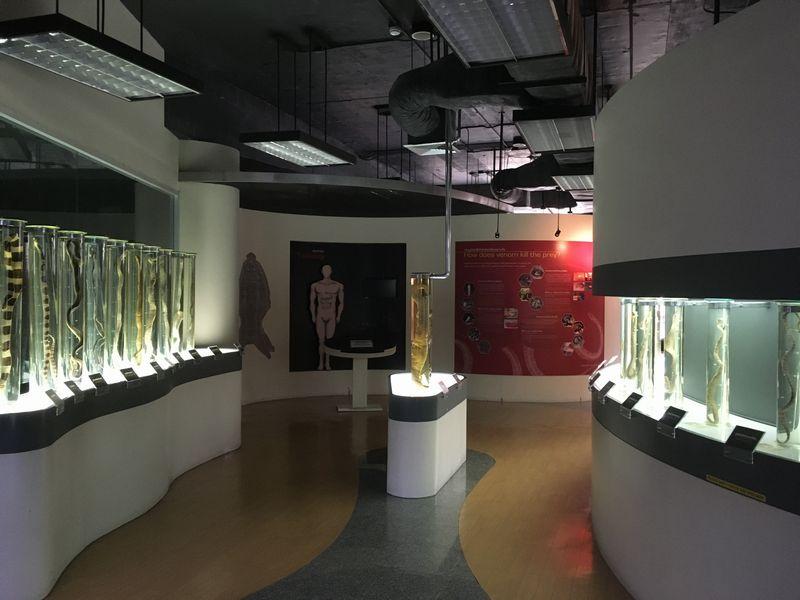 タイ バンコク スネークファーム SNAKE FARM ヘビ ホルマリン漬け 展示室
