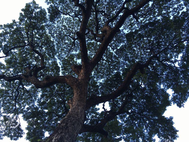 タイ バンコク ジム・トンプソンの家 木