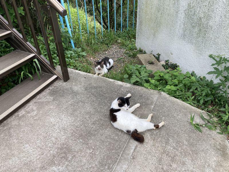 鋸山 山頂駅 猫