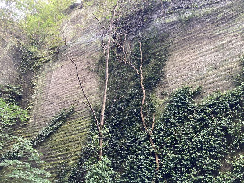 鋸山 岩 壁 植物